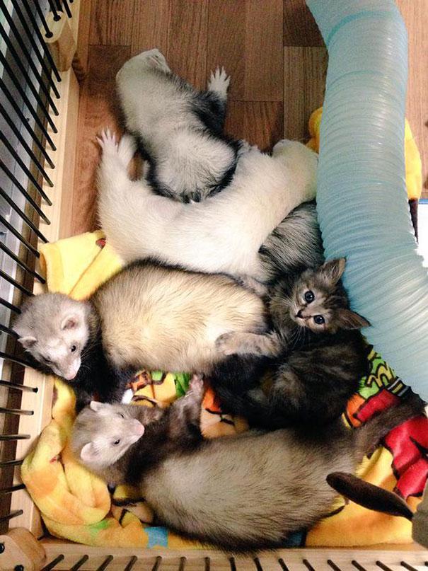 rescue-gattino-Komari-Ferret-fratelli-52