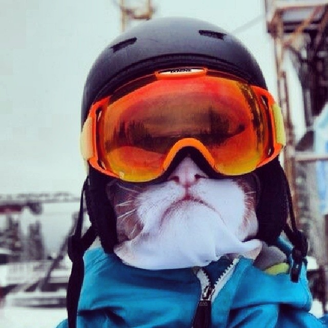 balaclava-animal-face-covering-winter-teya-salat-26