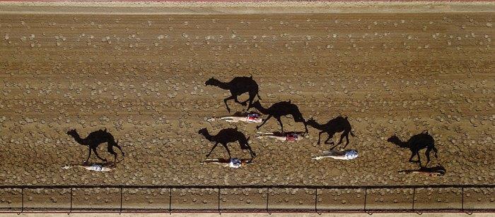 Al Marmoun Camel Racetrack, Dubai, United Arab Emirates