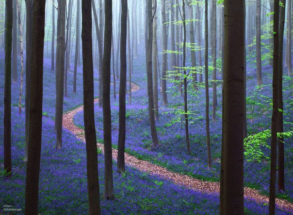 Mystical Forest In Belgium