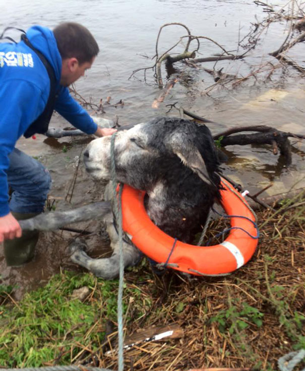 rescued-donkey-smiling-fall-river-flood-mike-ireland-50