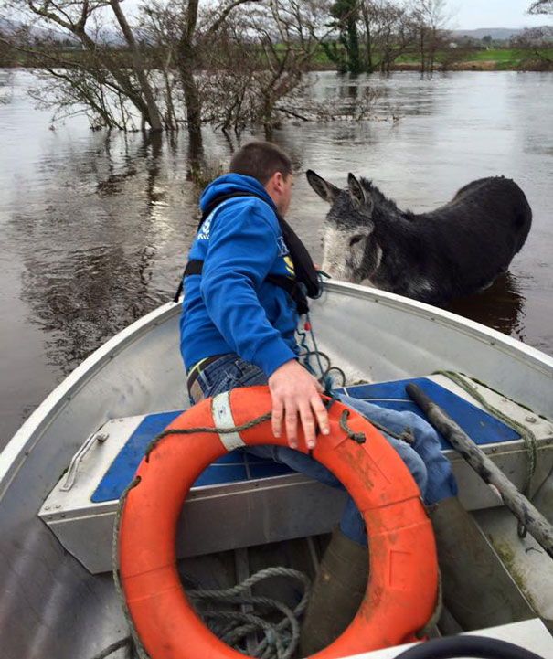 rescued-donkey-smiling-fall-river-flood-mike-ireland-59