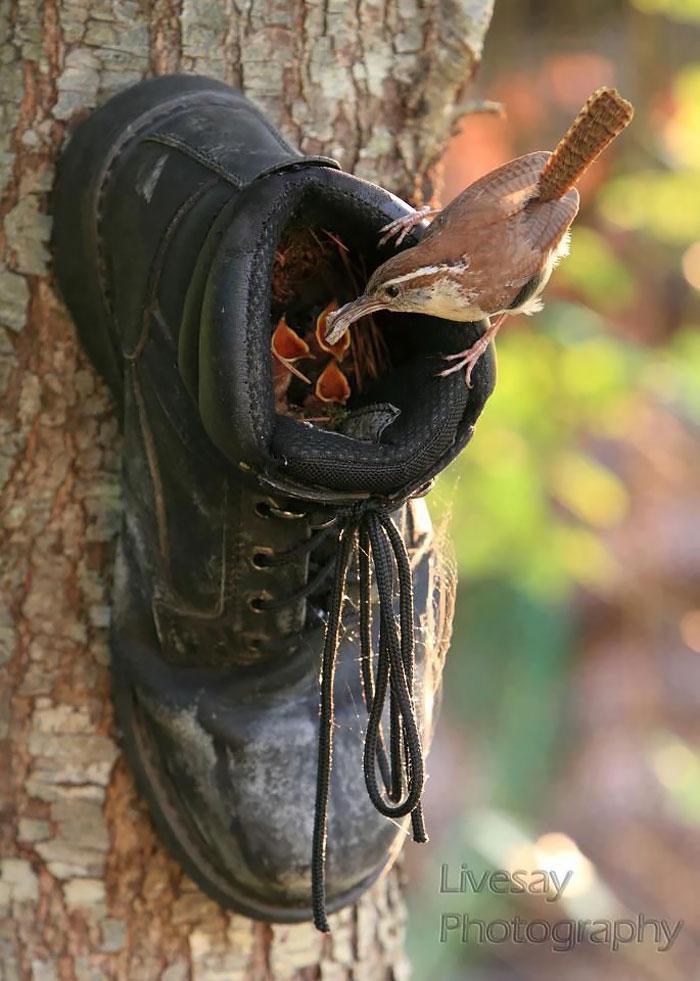Unusual Nest