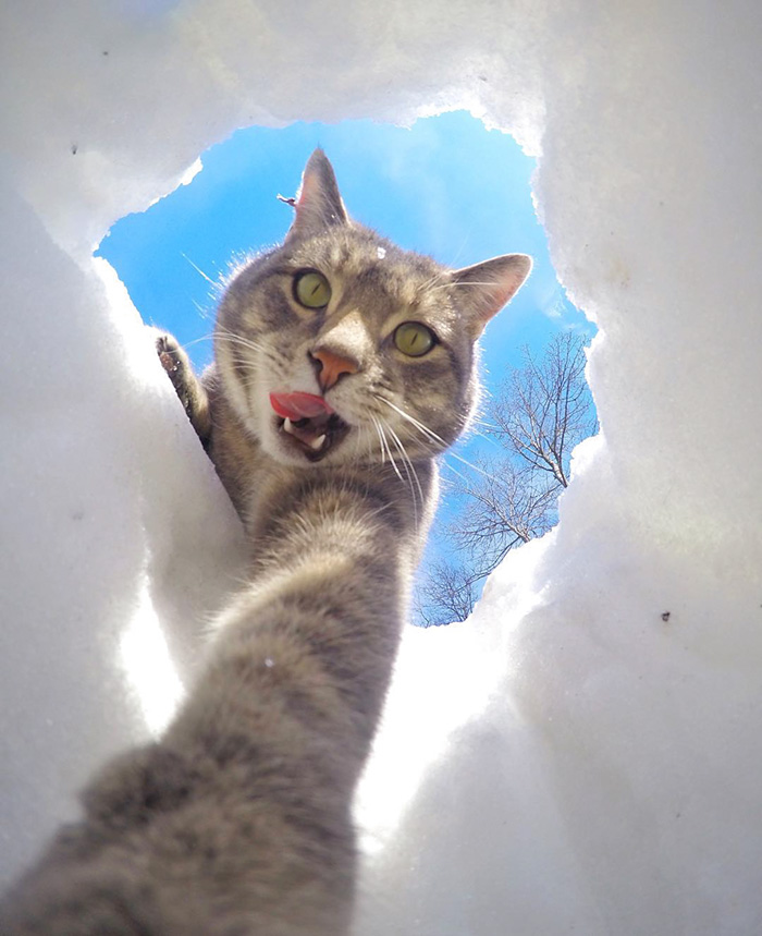 manny cat takes selfies dogs gopro 16 - It Was An Ordinary Day When His Cat Started To Take Selfies