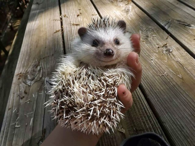 The Happiest Little Hedgehog
