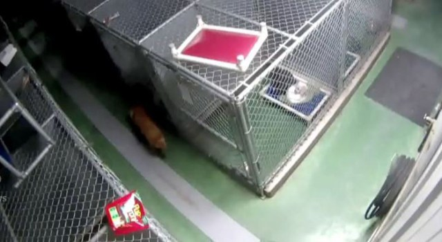 dog-escapes-kennel-comfort-puppies-barkers-pet-motel-10