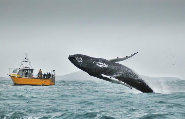 Whale Watchers Look The Wrong Way