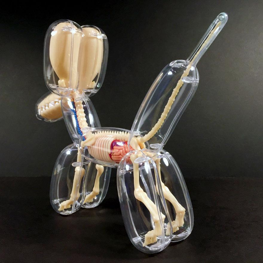 anatomical-balloons-dog-bear-jason-freeny-1