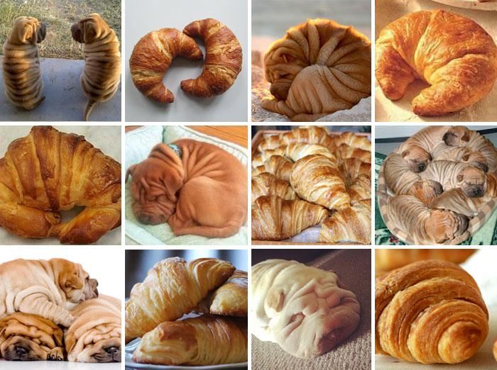 Shar-Pei Or Croissant
