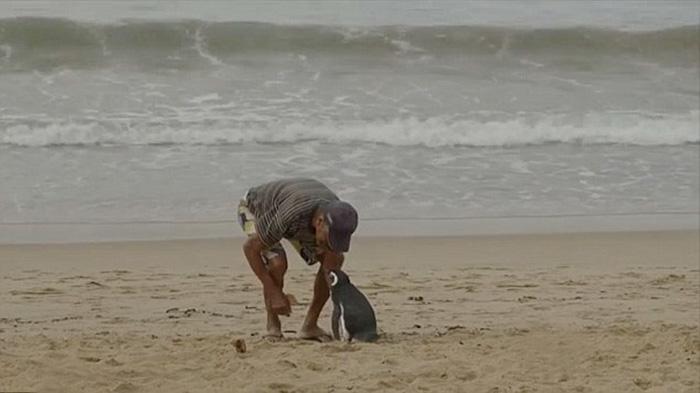 uomo-salva-pinguino-torna-nuota-5000-miglia-17