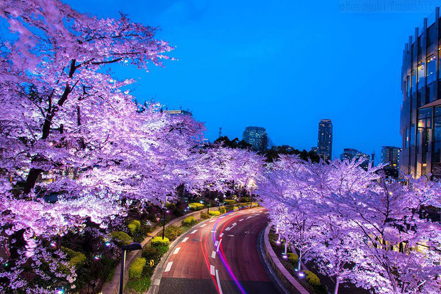 spring-japan-cherry-blossoms-national-geographics-9
