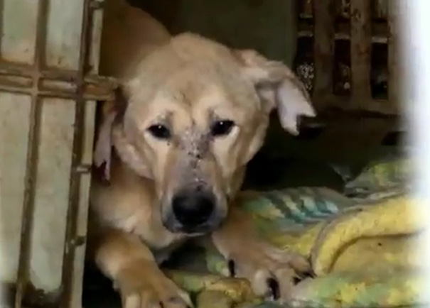 woman-rescues-250-dogs-israel-shelter-project-dog-tales-8