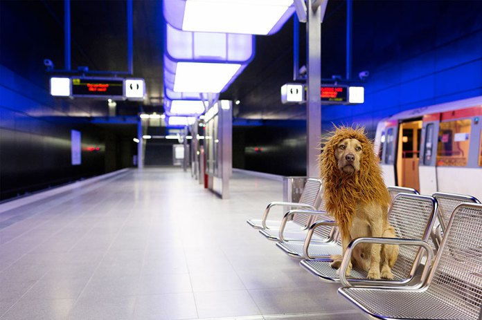stray-dog-big-city-lion-grossstadtlowe-julia-marie-werner-11