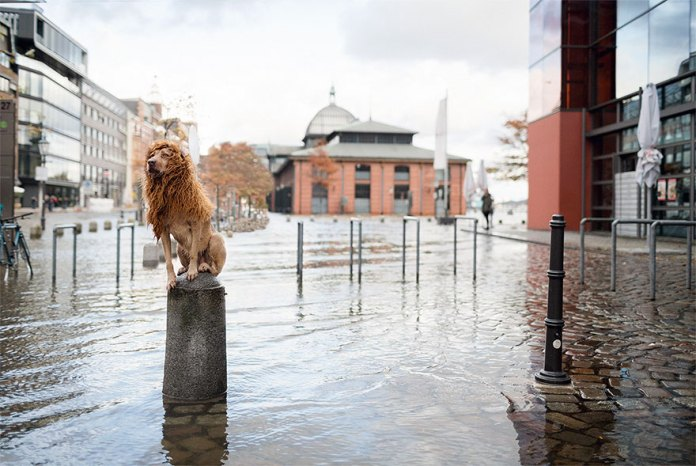 stray-dog-big-city-lion-grossstadtlowe-julia-marie-werner-16