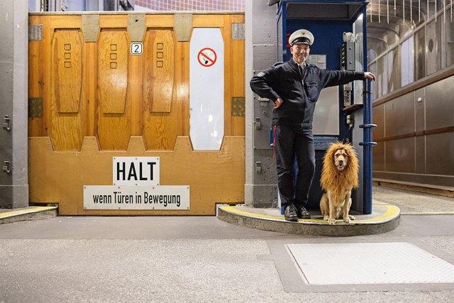 stray-dog-big-city-lion-grossstadtlowe-julia-marie-werner-8