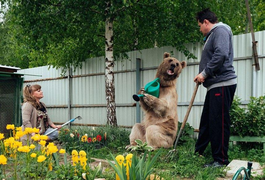 adottato-bear-russo-famiglia-Stepan-a16