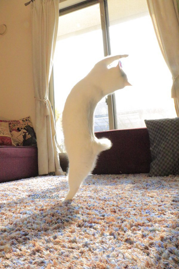 ballet cat japan 44 - Cat Is Home Alone. Guess What? It's Dance Time!
