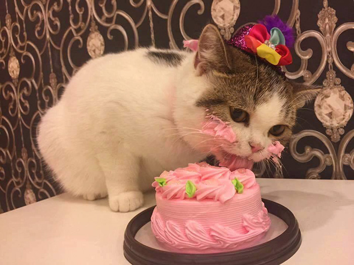 This Cat Eating A Cake On His Birthday Is Hilariously Adorable Bored Panda