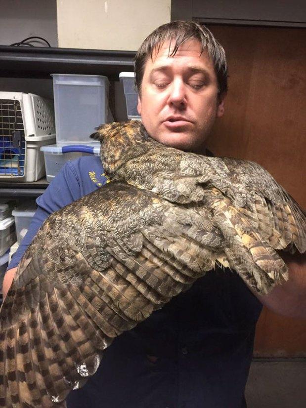rescue-owl-hugs-man-gigi-douglas-pojeky-5