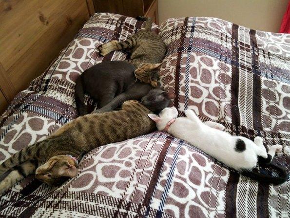 Ninguém queria esses 3 gatos cegos, até que esta mulher decidisse adotá-los