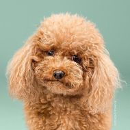 dog-grooming-photography-2