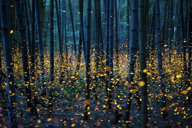 Fireflies lighting up a forest