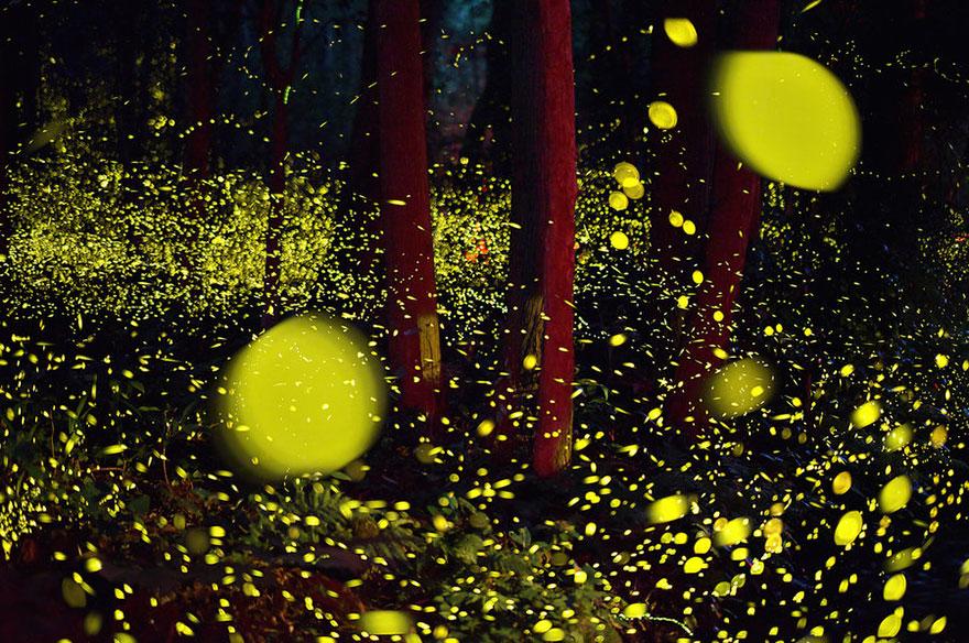 fireflies-long-exposure-photography-2016-japan-5