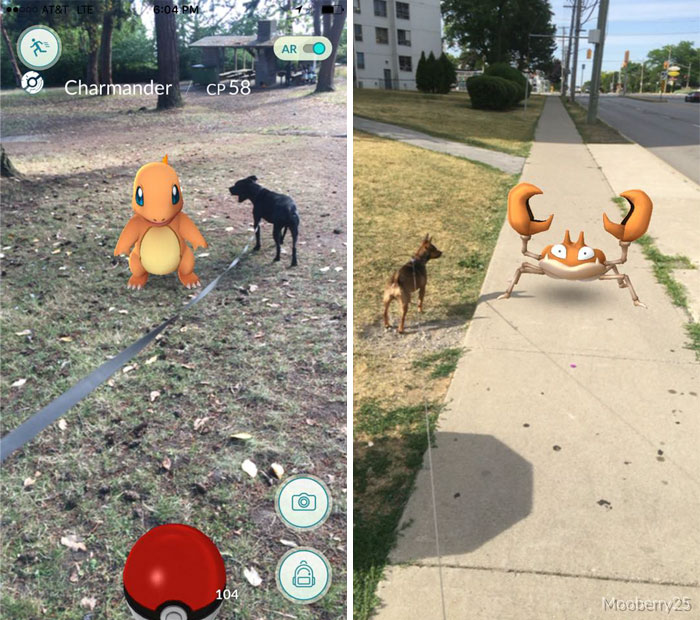 inspiration-pokemon-go-dog-walking