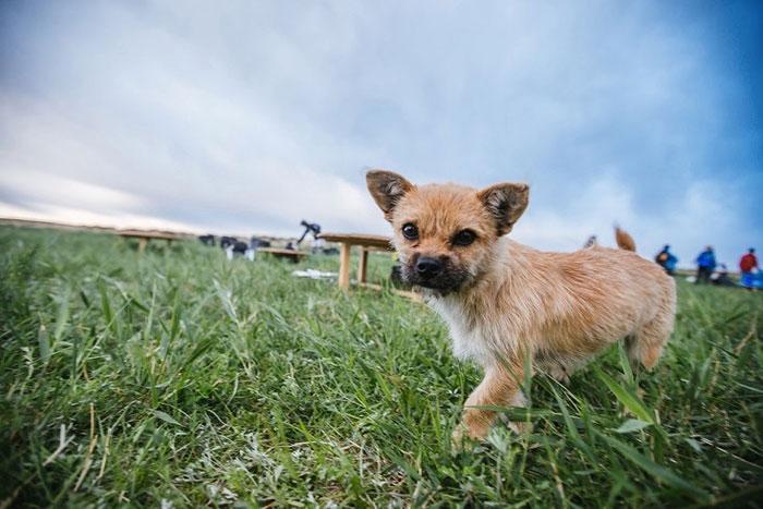 stray-dog-reunited-runner-gobi-dion-leonard-china-4