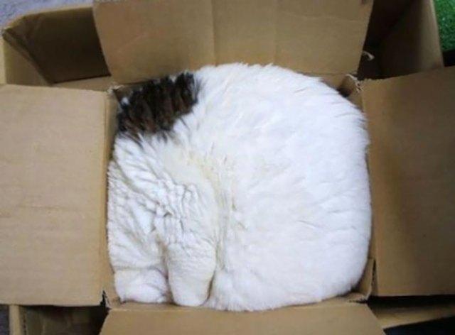 Cat.rar