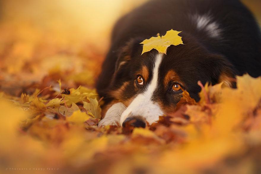 Photographer Captures Soulful Portraits Of Dogs Enjoying