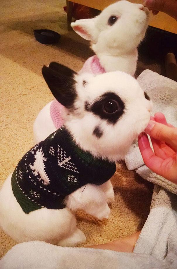 Sweater buns