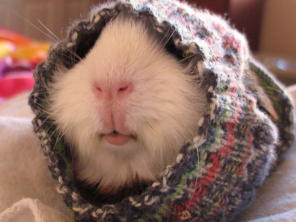 In his sweater I knitted him