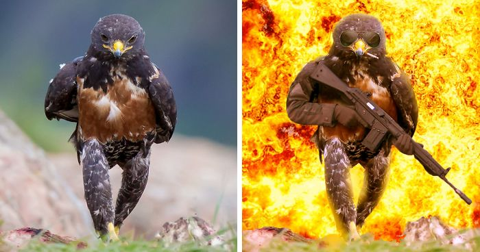 This Badass Hawk Just Sparked The Most Intense Photoshop Battle