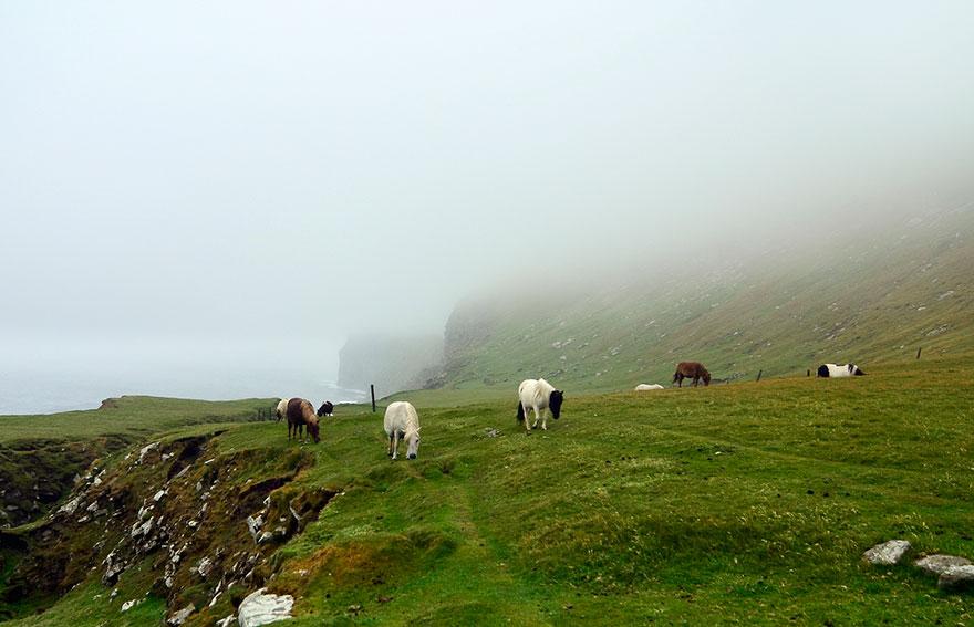 Miniature-pony-Foula-island-1