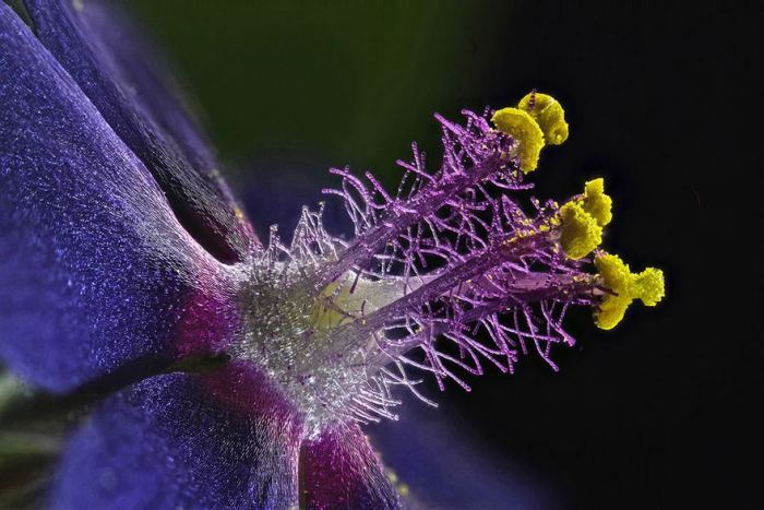 Eighth Place. Wildflower Stamens