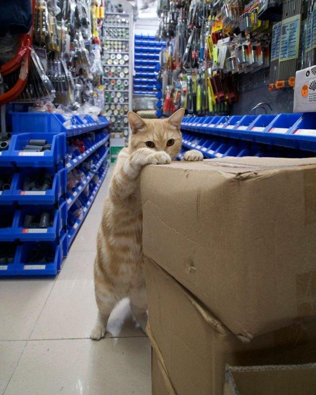 Shop Cats