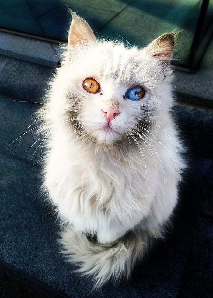 worlds most beautiful cats 46 57fc90bd6148b  700 - 10+ Of The Most Beautiful Cats In The World