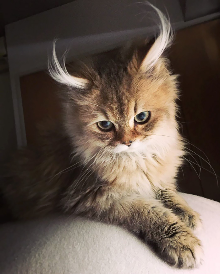 This Cutie With Antelope Horns