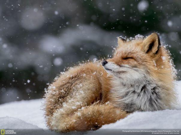 Bañarse en el escama de la nieve