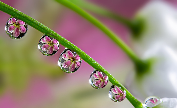 To See Flower In Water Drop
