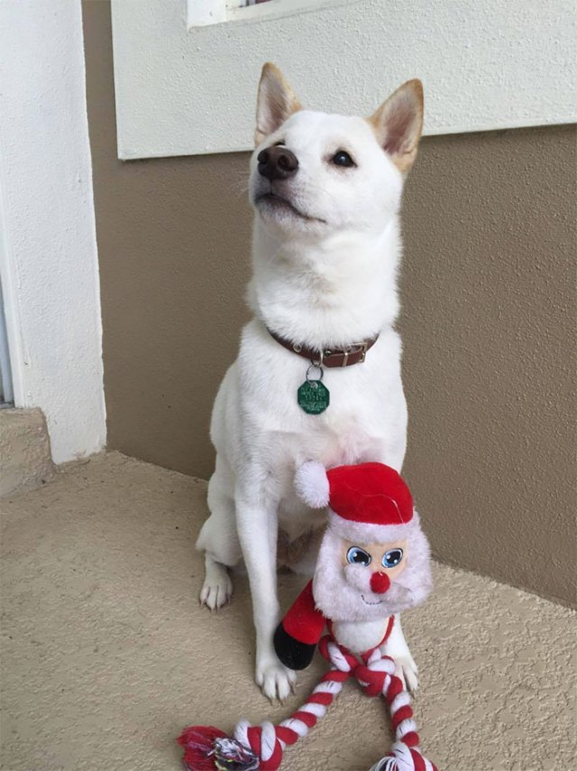 dog-toy-santa-mall-picture-kya-13