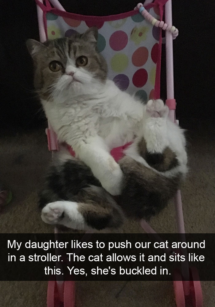 Image of: Paw Sible Cat Snap Bored Panda 62 Hilarious Cat Snapchats That You Need To See Right Meow Bored Panda