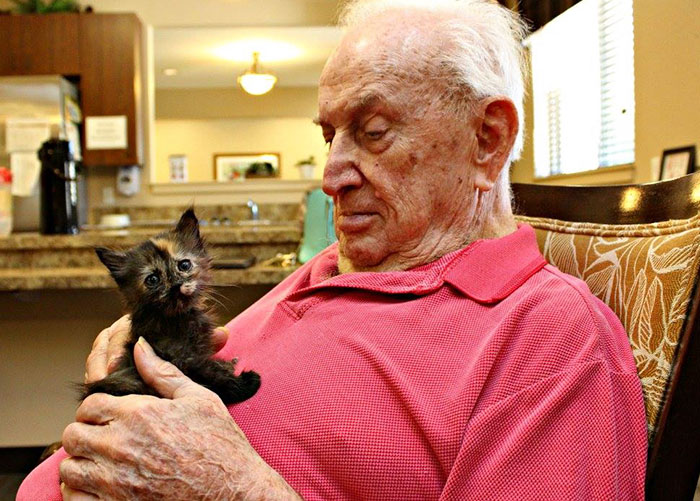 retirement-home-shelter-cats-3