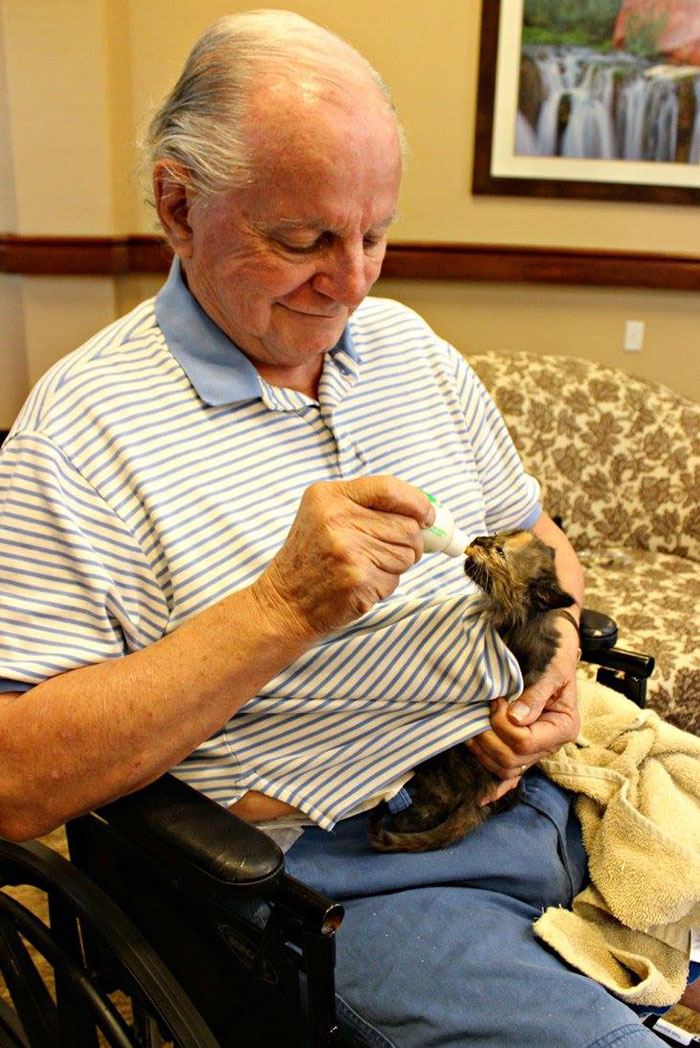 retirement-home-shelter-cats-4
