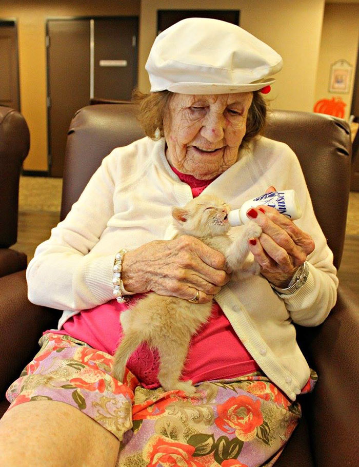retirement-home-shelter-cats-5
