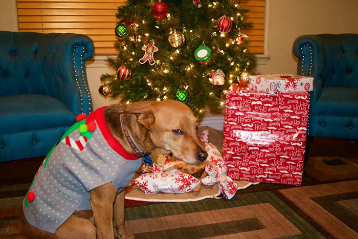 My Friend's Dog's Reaction After Finding Out That His Christmas Gift Was A Sweater