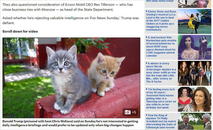 trump-chrome-extension-make-america-kittens-again-8