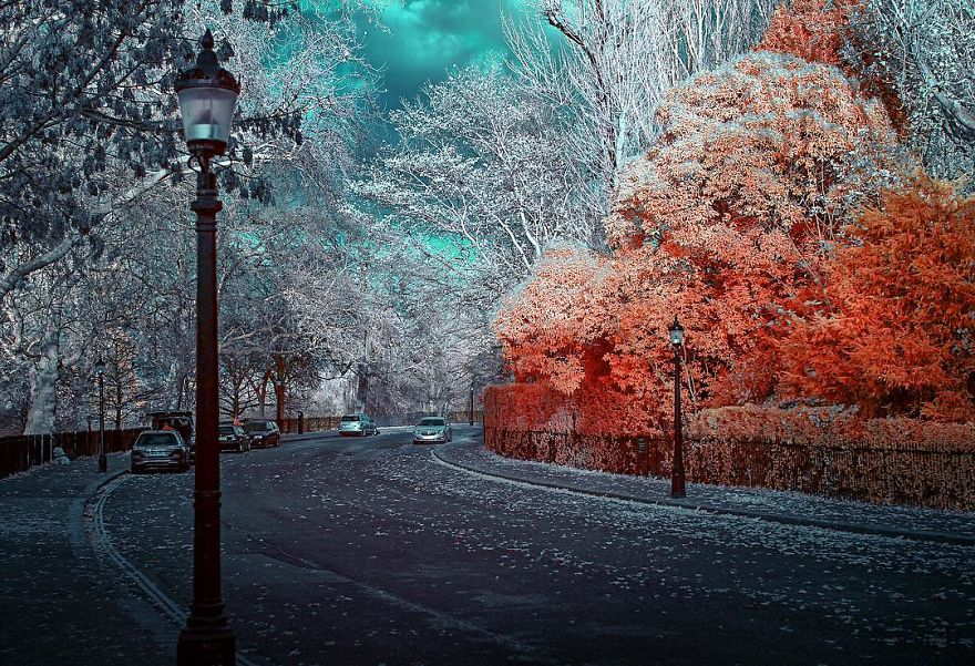 Auburn Grove