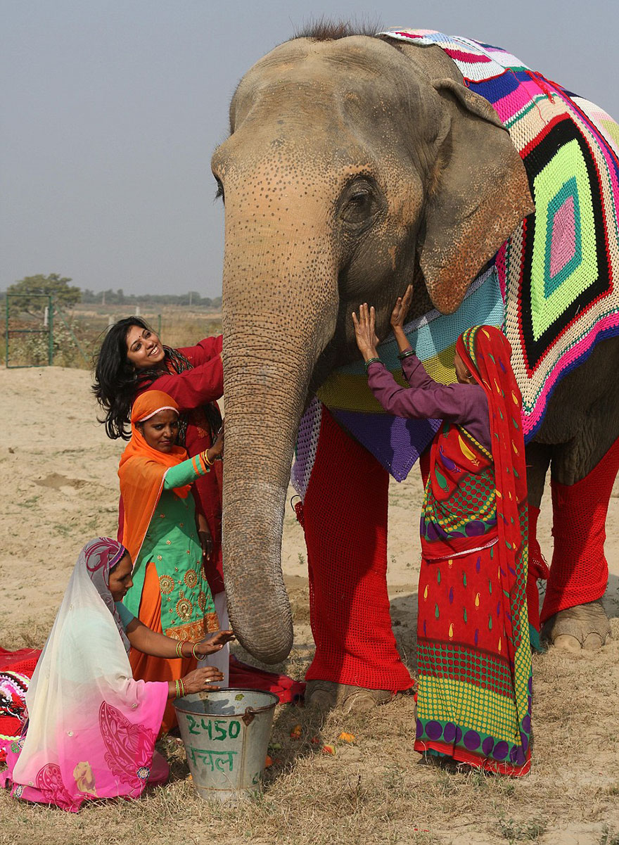 people-knit-giant-sweaters-rescue-elephants-5